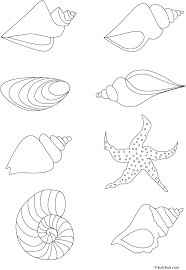 how to draw coral learn how to draw a shell with simple step by