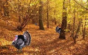 free thanksgiving turkey free turkey wallpaper wallpapersafari