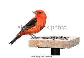 bird feeder cut out stock images u0026 pictures alamy