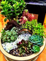 miniature succulent garden with bridge by cornell farm cactus