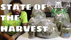 state of the harvest what we did to increase our yield in our