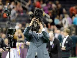 affenpinscher joe westminster kennel club dog show