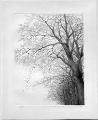 121 best tree sketches images on pinterest drawing trees draw