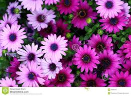 Pictures Of Flowers by Flower U0026 Garden Stock Photos Stock Images Of Flowers U0026 Gardens
