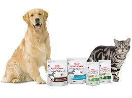 treats for dogs cats royal canin
