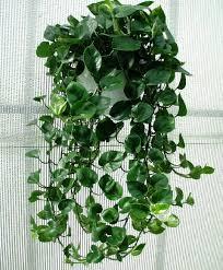 7 ornamental houseplants for beginners