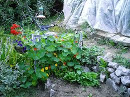 hummingbird plants minerva u0027s garden blog