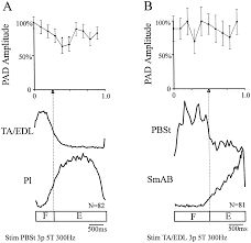 the modulation of presynaptic inhibition in single muscle primary