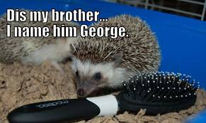 Hedgehog Meme - hedgehog meme