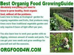 vegetable garden mulch newspaper youtube