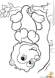 possum coloring pages getcoloringpages com