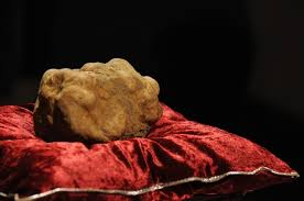 italian white truffle white truffle sold in italy for a record 150 000