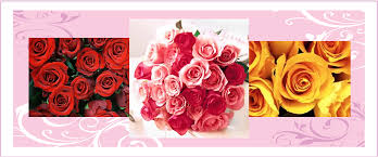 Meaning Of Pink Roses Flowers - valentine u0027s day flowers feature special meanings galore a