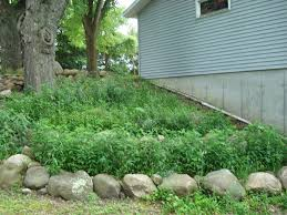 plants for rock gardens shaded hillside rock garden improved ecosystems