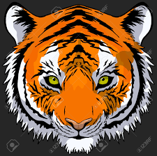 cartoon tiger face hand drawn tiger head front view vector