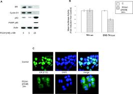 proteasome regulated erbb2 and estrogen receptor pathways in