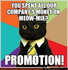 Business Cat Memes - 17 best business cat images on pinterest business cat meme funny