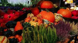 free photo fall pumpkin autumn garden free image on pixabay