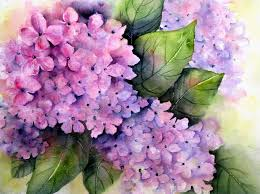 purple hydrangea pink purple hydrangea 12 x 16 arches 140 cp thing flickr