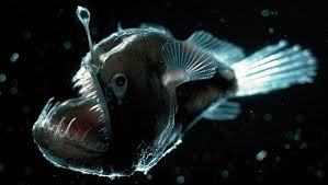 the craziest deep sea creatures geek com