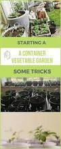 what do you need to start a vegetable garden a guide vegetable