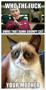 Grouchy Cat Meme - who owns grumpy cat humor pinterest grumpy cat cat and funny