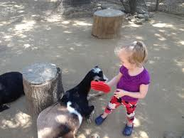 visit the quaint oc zoo in orange california socal field trips