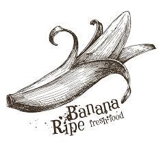 banana vector logo design template fruit or food stock vector