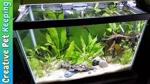 aquarium design exle how to setup a 20 gallon planted aquarium substrate and