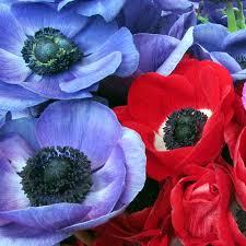 wholesale flowers online wholesale flowers bulk wedding flowers online bloomsbythebox