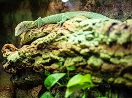 Detroit Zoo Night Lights by Green Tree Monitor Lizard Of Detroit Zoo Album On Imgur