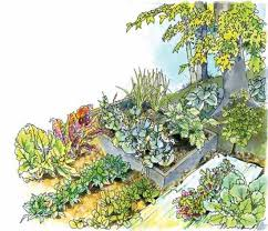 best vegetables to grow in the shade organic gardening mother