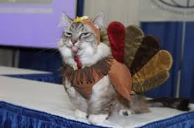 thanksgiving cats 26 photos thechive