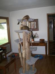 Cat Condos Cheap Cat Tree Kingdom Home A House Full Of Kitties Pinterest