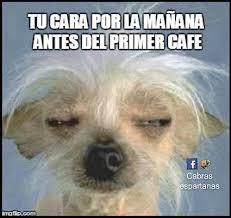 Cafe Meme - un café por la mañana cabras espartanas