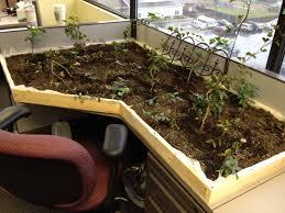 pest control indoor garden built now little flies gardening
