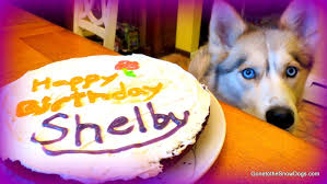 birthday cakes for dogs birthday cake for the dog how to dog birthday cake recipe