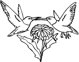 hummingbird coloring pages fablesfromthefriends com