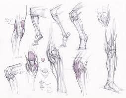 Human Anatomy Reference 170 Best Legs Images On Pinterest Human Anatomy Anatomy