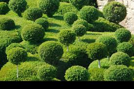 Topiary Frames Online Topiaries Topiary Trees Boxwood Topiary Topiary Frames