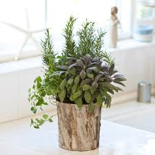 lights to grow herbs indoors growing herbs indoors tips tricks