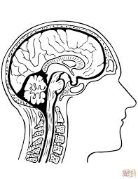 Human Brain Coloring Page Free Printable Coloring Pages Brain Coloring Page