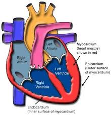 What Is Dead Tissue Called Myocarditis Texas Heart Institute Heart Information Center