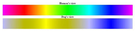 Green Red Color Blind Is It True That Dogs Are Colorblind Dogvills