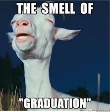 Graduation Meme - the smell of graduation that smell goat meme generator