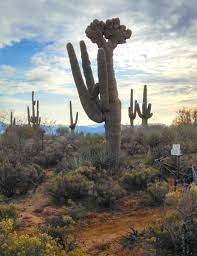 Arizona vegetaion images Free images landscape tree nature cactus desert flower jpg