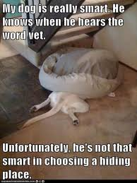 Dog At Vet Meme - funny pictures dog going to the vet dump a day