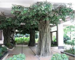 outdoor large decoration artificial banyan tree artificial outdoor