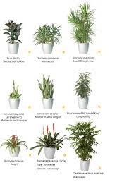 indoor plants nz rent medium to high light other plants from ambius