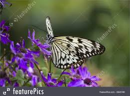 wildlife butterfly on flowers stock photo i2945156 at featurepics